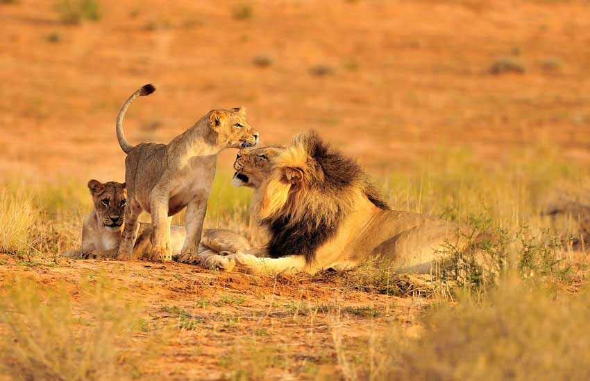 Ruaha-National-Park